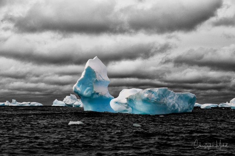 091204_penguin_island_7708.jpg