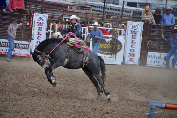 Bucking Horse Sale - Rodeo