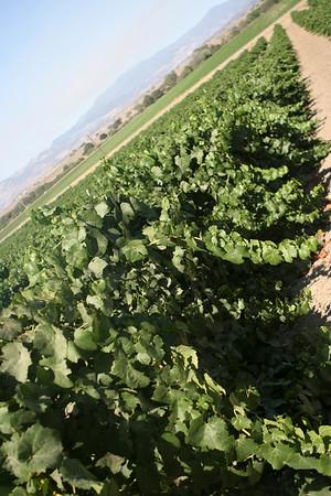Santa Barbara Area Wine Tasting