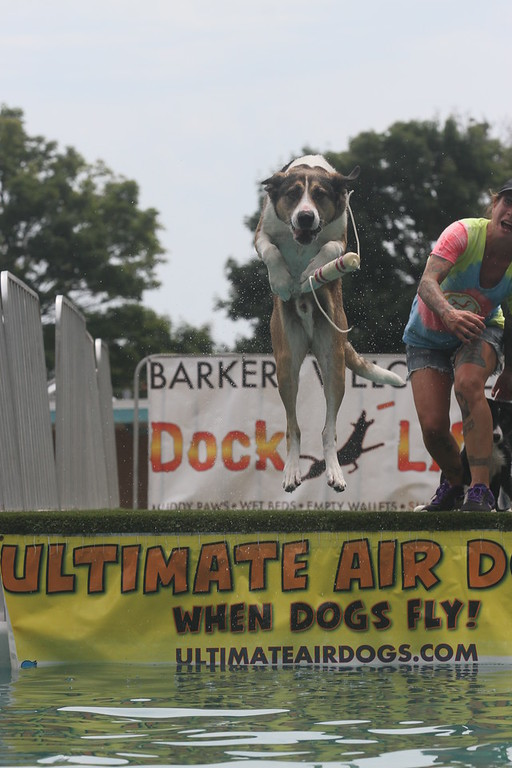 . High-flying stunts performed by the Ultimate Air Dogs was part of the action at the AquaFest in St. Clair Shores.