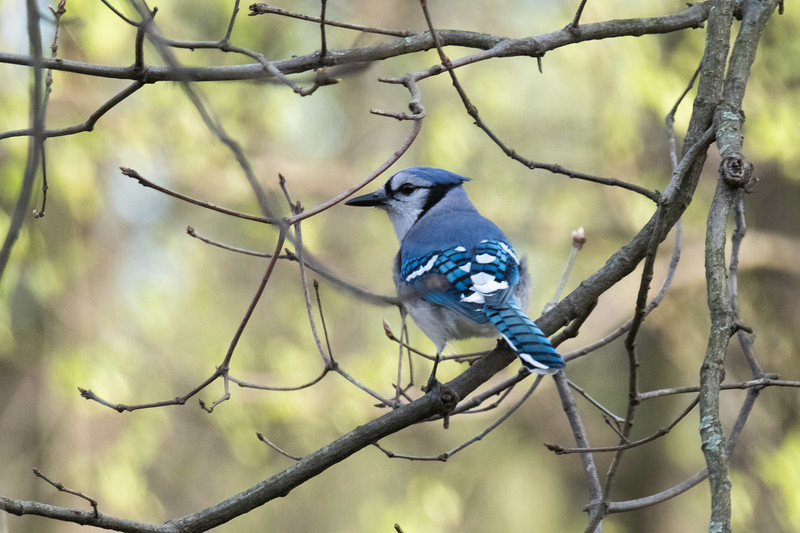birdfeeder-7265.jpg