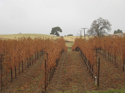 Fairplay Vineyards with Ann and Darryl, November 2012