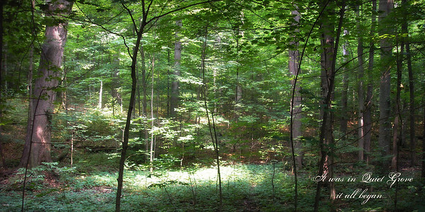 Sacred Grove by Dave Perry