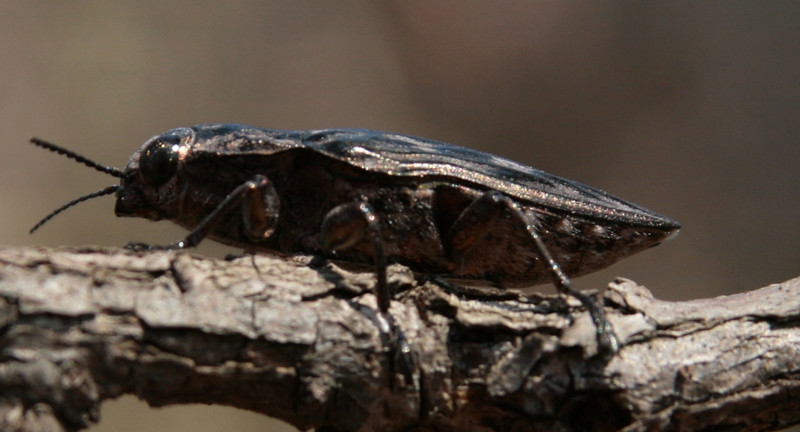 scuplture beetle 1.jpg