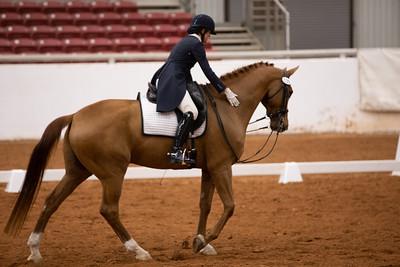 Horse 135