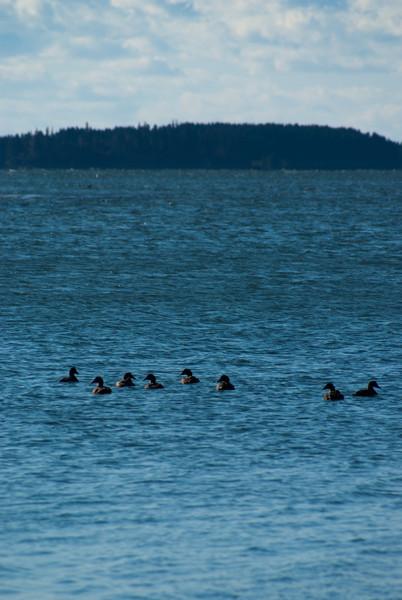 Maine Vacation-02888.jpg