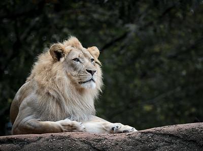 Zoo Test D850