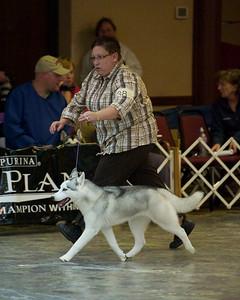 2010 Siberian Husky Nationals - Wednesday
