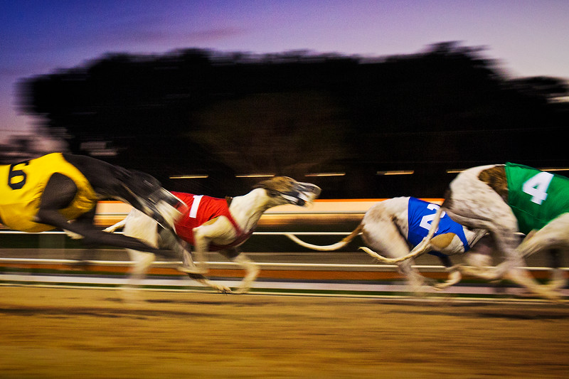 Boston_Commercial_Photographer_Dog_Racing_00001.JPG
