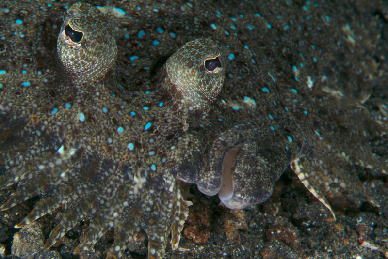 fish flounder1.jpg