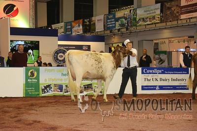 UK Dairy Day Shorthorns 2015