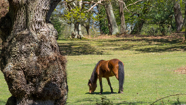 The New Forest – Wherever I Wander 2015