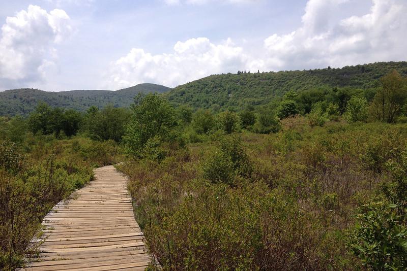 Graveyard Fields Loop Trail (5,040')