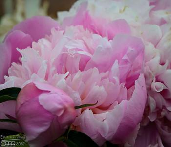 Garden Flowers - June 2012