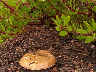 2014 Ashland Greenhouse Poinsettias and other stuff
