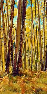 16x32 aspen grove