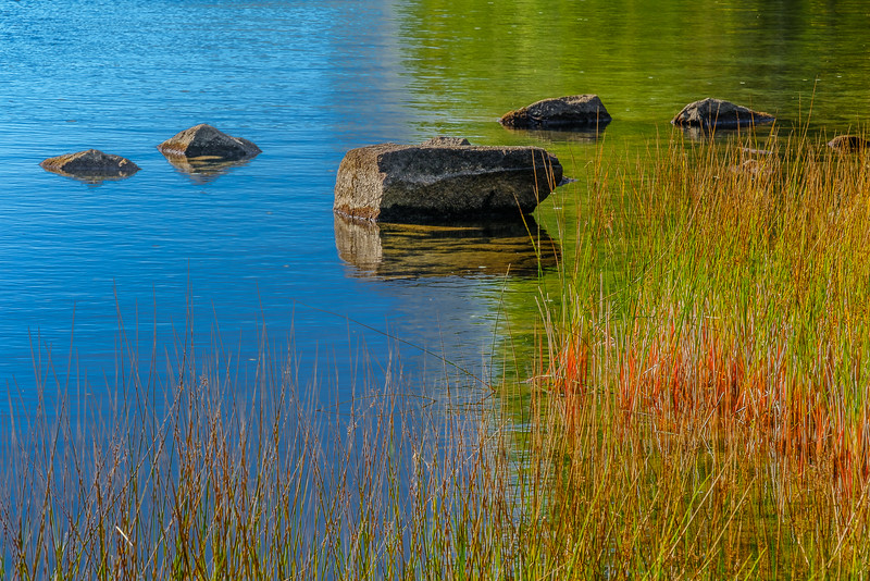Reeds, Grasses and Rocks in the Still Waters of a Pond