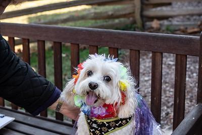 Beaverdam Run Halloween Dog Costume Contest