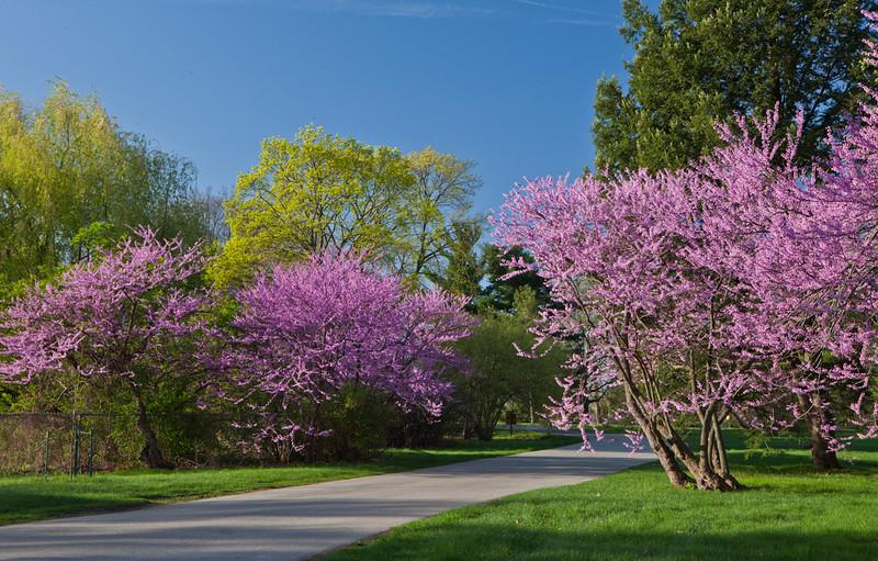 Spring12-1535.jpg
