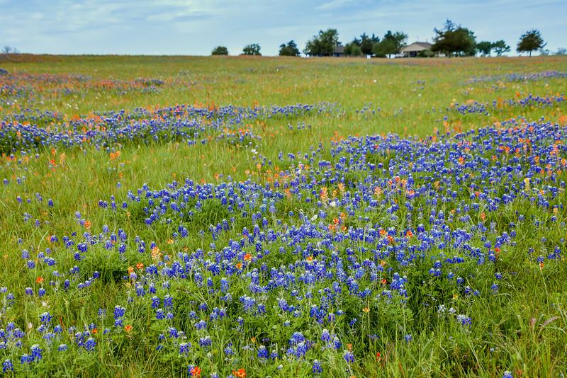 2016_4_9 Texas Wildflower Shoot-8581.jpg