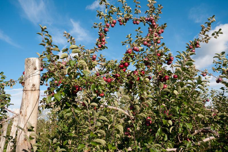 Fresh cider in Cedrerie Verger Bilodeau in Quebec, Canada