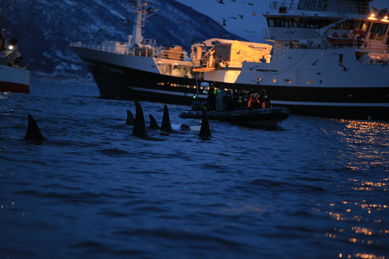 Piet van den Bemd TEAM MAPITO ✪ Certified RYA & Expedition Leader ⚓️  Highly experienced Production & LM across all levels of film and photographic production. Arctic Expedition Leader, Sustainable Wildlife Wilderness Adventure Tours & Location Scouting. TEAM MAPITO Production Services Filming, Consultancy & Collaboration.   HOW CAN WE HELP? https://www.teammapito.com/ ✴️✴️✴️✴️✴️