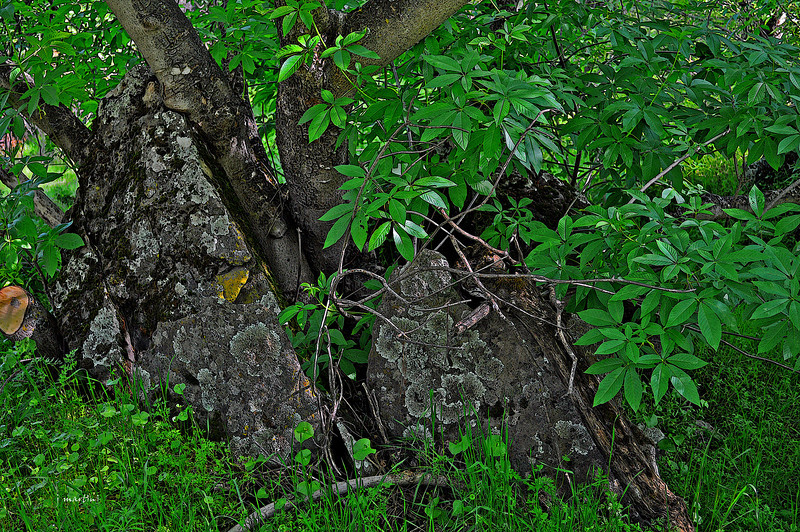 green nook 11-26-2010.jpg