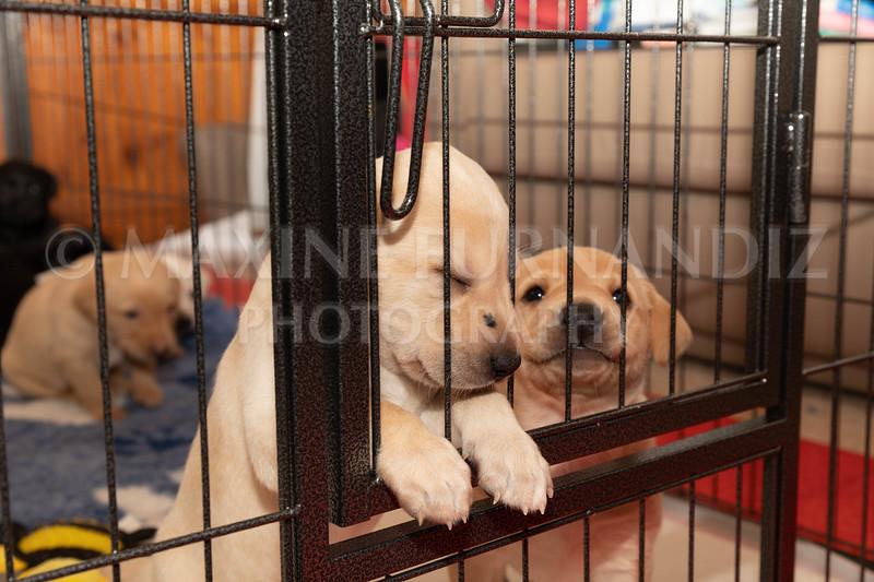 Weika Puppies 2 Mar 2019-8486.jpg