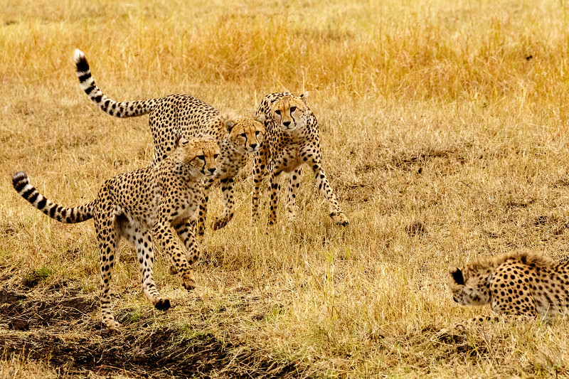 Kenya 2015-07737.jpg