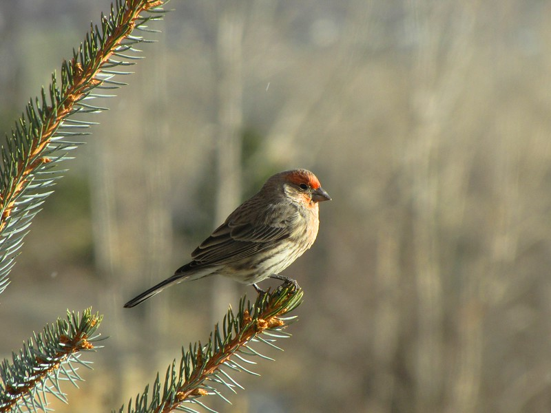 birds (170).jpg
