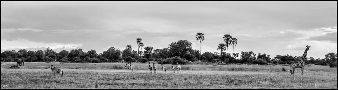 Elephant, Zebra, Giraffe: Floodplains, Okovango Delta