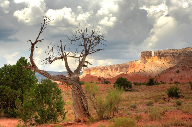Gerald's Tree.jpg
