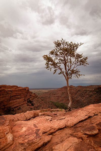 Lone tree on a rocky mountain