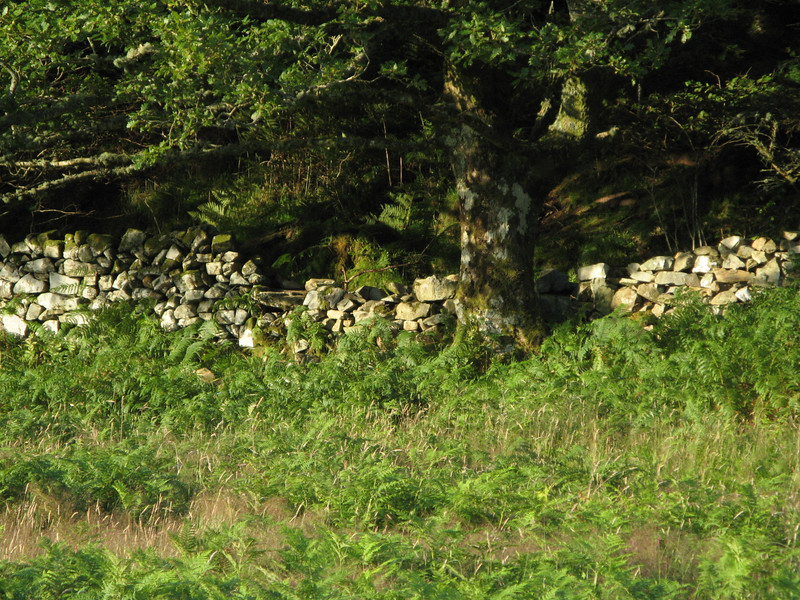 Lots of dry stone walls everywhere.