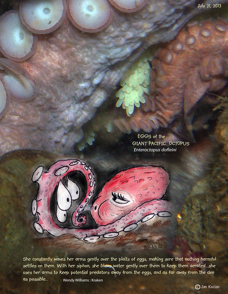 DAY 62.   GIANT PACIFIC OCTOPUS  ( Enteroctopus dofleini ) eggs. Possession Point Fingers, Whidbey Island. July 21, 2013