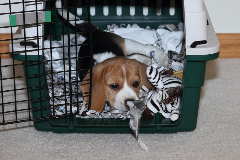 Checking his Crate 1