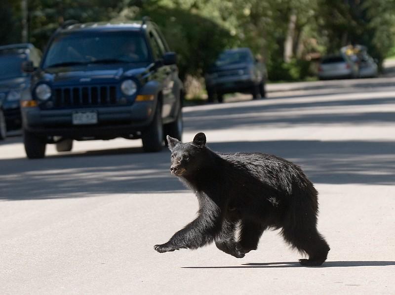 Bear-8.jpg