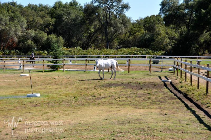 EB&Horses-082.jpg