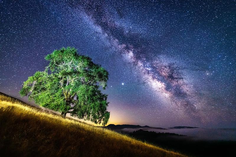Hillside Oak & Milky Way, Study 1, Sonoma County