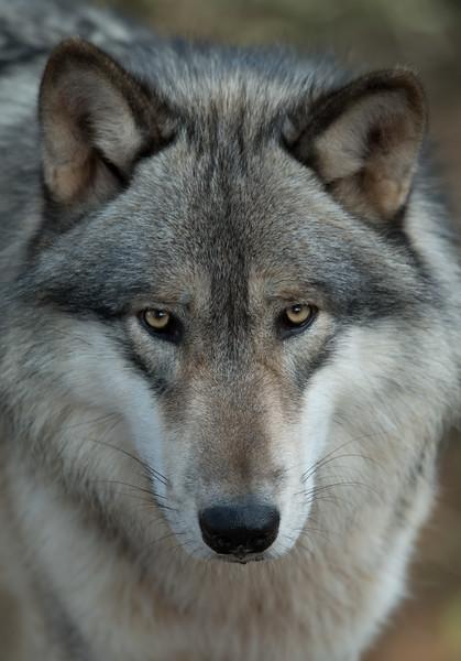 Seacrest Wolves_-34.jpg
