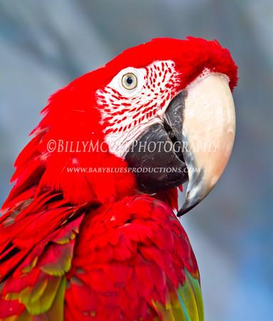 Pirate Birds - 14 Aug 2010