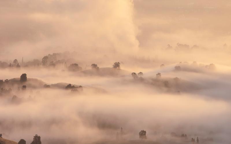 Fog Topia