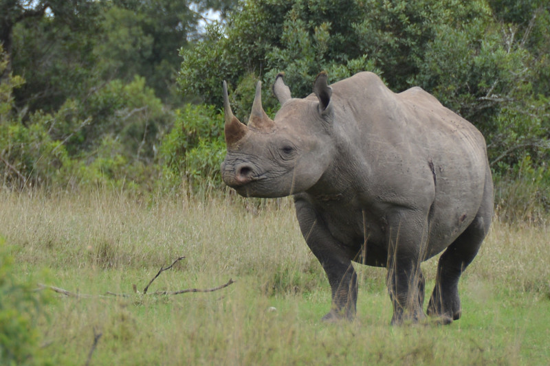 East Africa Safari 9.jpg