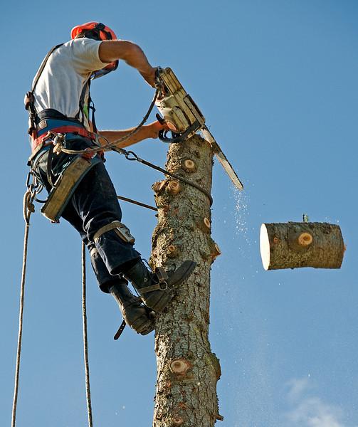 NC-Neighbors tree-20100713A-8650A.jpg