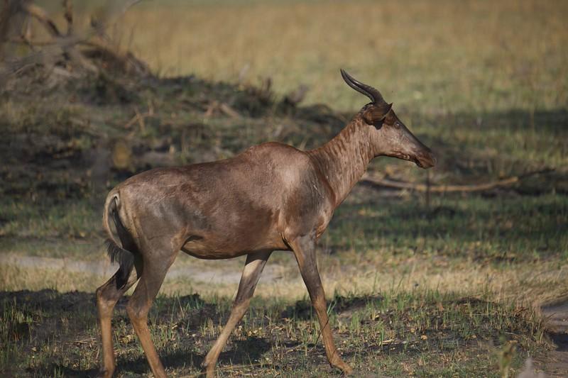 Tessebe, Shinde camp, Botswana