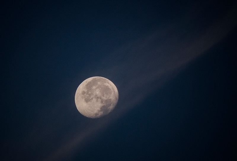 8.10.17 - Prairie Creek Recreation Area: Luna