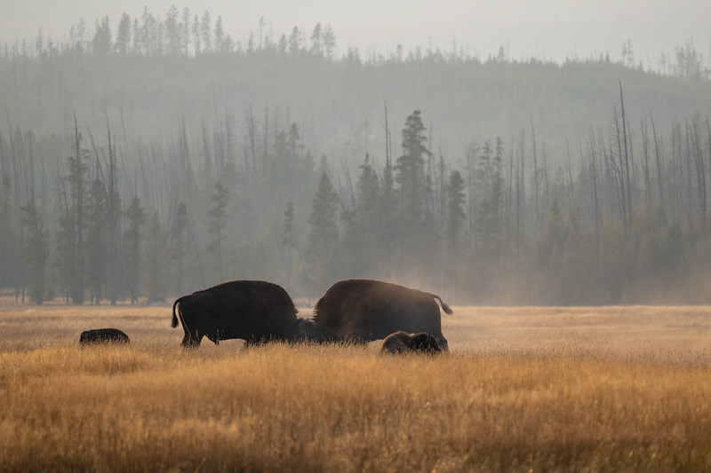 Yellowstone-36.jpg