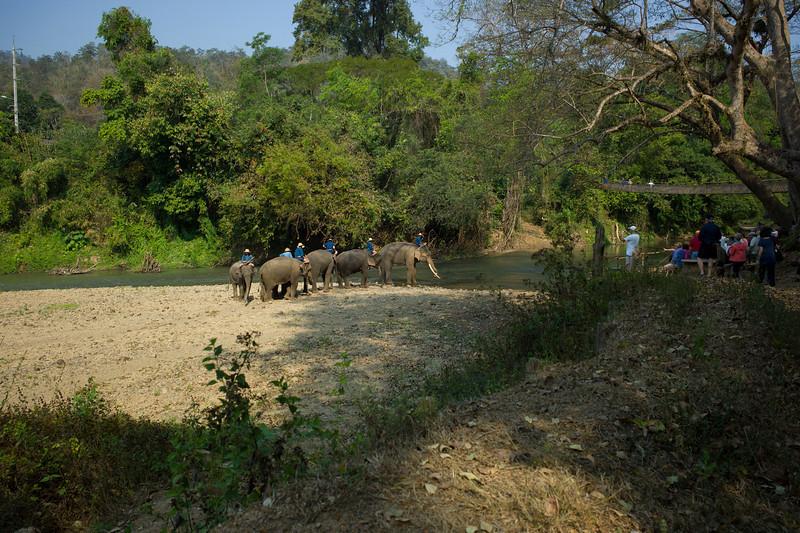 The Chiang Dao Elephant Training Center