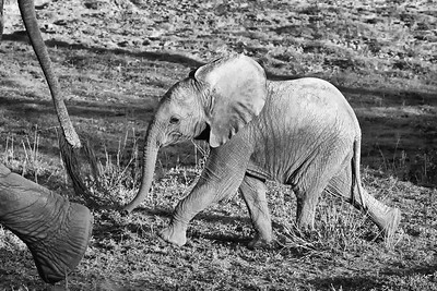 Elephants of Ndutu