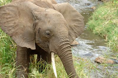 Safari en Tanzanie (2004)